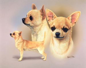 Signed Multistudy Chihuahua Print MS1042